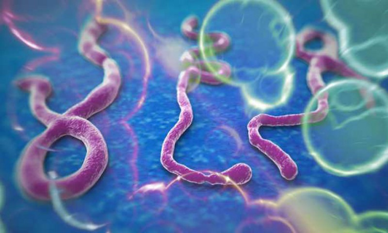 Ebola serum for Africa patients within weeks, says WHO